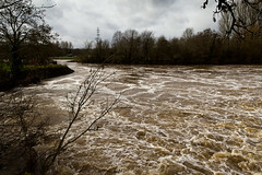 Salmon Pool stirred up! (Keith in Exeter) Tags: trees england sky water woodland river landscape outdoors whitewater stream moody flood cloudy devon exeter foam riverbank exe turbulent spate salmonpool