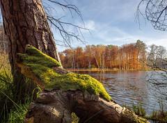 famo(o)s (Thomas Heuck) Tags: autumn trees lake water moos mritznationalpark