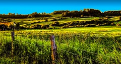 Farmland - Charlevoix, Quebec (mikederrico69) Tags: trees summer plants green nature grass rural landscape farm greenery