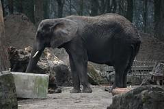 Olli (tasj) Tags: zoo ouwehandsdierenpark