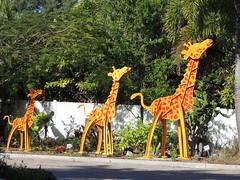 DSCN8465 (Dale_Wiley) Tags: art metal statues giraffe horseshoes