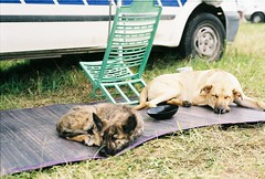 Puppy heaven (B@XT3R) Tags: party portugal festival punk free traveller anarchy rave raver fronteira autonomous soundsystems portalegre freetekno anarchis illeal freekuency