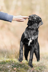 Nica (Maria Zielonka) Tags: dog black mutt mix labrador fuerteventura hund schwarz mischling welfare fuerte tierschutz bardino