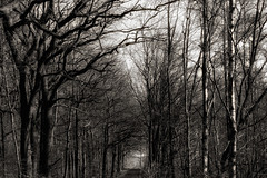 the naked forest (j.p.yef) Tags: trees bw nature monochrome forest germany seasons bare sw rheinland yef peterfey bestcapturesaoi elitegalleryaoi jpyef
