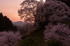 44Butsuryuji Temple (anglo10) Tags: sunset japan cherry temple