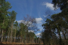 25.3.16 Delamere Forest 33 (donald judge) Tags: trees water forest countryside cheshire mere delamere