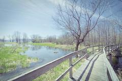 Boardwalk at Sandy Bottom Park (melike erkan) Tags: trees sky lake nature water grass roc flickr skies boardwalk marsh rochesterny honeoye westernny flickrnature honeoyelake sonya6000