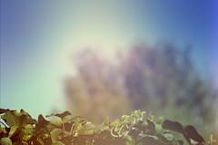 blur-dreamy-texture-texturepalace-82 (texturepalace) Tags: blur color leaves cc creativecommons dreamtextures texturepalace blurtextures