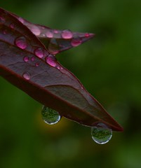 after a night of rain (samX_29) Tags: flower waterdroplets
