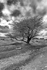 Moorland View (Jon Sharp) Tags: sky tree blackwhite moor bodmin