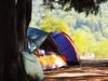 Camp (i.kharebashvili) Tags: travel trees camp color tree green nature colors coolpix camps tre gre khare zvare kharebashvili