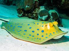 IMG_0451 (eye[4]eye) Tags: egypt diving gypten tauchen bluewaves