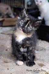 Gatita Modelo (martagaldi) Tags: cat kitty gato gata gatita gatito