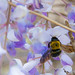 Black Bee on Flower 2