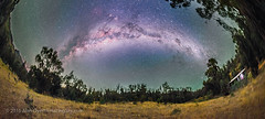 Panorama of the Southern Milky Way (Fish-eye) (Amazing Sky Photography) Tags: panorama australia nsw milkyway ptgui southernsky coonabarabran airglow galacticcenter darklanes centreofthegalaxy darkemu tibucgardens