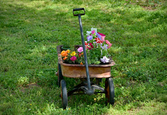 A Wagon Full of Color (BKHagar *Kim*) Tags: flowers metal yard wagon al backyard wheels alabama rusty tanner momdads bkhagar
