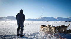 Musher and whip (Lil [Kristen Elsby]) Tags: arctic frombehind greenland inuit editorial dogsledding winterwonderland arcticcircle sleddogs dogsled travelphotography ilulissat jakobshavn westgreenland greenlander vestgronland canon5dmarkii greenlandicdogs
