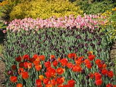mozirski-gaj_40 (carlo) Tags: flowers olympus slovenia slovenija fiore botanicalgarden omd em1 ortobotanico giardinobotanico mozirje mozirskigaj