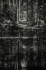 enchanted Forest (imagomagia) Tags: blackandwhite abstract tree art water forest reflections smland troll bnw fairytales fineartphotography blackandwhitephotography misterious artphoto johnbauer swedishforest extremeblackandwhite