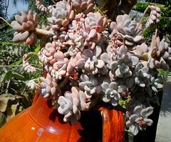 Giardini Ravino/Cactus,Aloe,giant Saguari,Agave and Opunzie (masha mashoveici) Tags: plant garden gardening natur fiori garten plantes suculent pianta botanischergarten sukkulenten jardinbotnico sukulent plantphotography cactussucculent piantesucculente