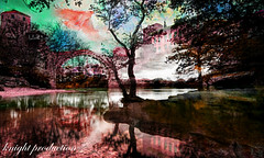 change the scenery (... Knight Production ...) Tags: city pink trees house lake reflection bird water river outside photo scenery outandabout ache waterreflection mirrorreflection cableknight knightproduction