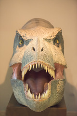 T-rex (lauramartiinez) Tags: grande nikon ojos boca trex cuenca dientes deberes divertido dinosaurio d300 simetra paleontolgico partidodebaloncesto museio