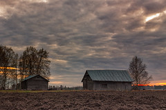 Old Barns In The Spring Sunset (k009034) Tags: trees sunset sky people mist tree nature beautiful night clouds rural finland landscape outdoors evening countryside spring no space bare barns dramatic nopeople scene fields birch copyspace dramaticsky copy idyllic baretree ruralscene 500px teamcanon matkaniva