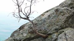 Μετεωρα P1150726 (omirou56) Tags: autumn tree nature strange rocks natur natura greece 169 meteora ελλαδα θεσσαλία φυση δεντρο βραχια μετεωρα φθινοπωρο παραξενο panasoniclumixdmctz40
