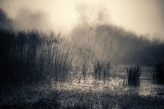 Mist in the swamp (cheyzan) Tags: winter light blackandwhite bw panorama plants black tree fall nature water rain stone rural forest canon landscape eos coast us leaf sand rainforest branch outdoor hiking mark iii country hill lawn hike trail swamp plantation 5d tamron ecosystem