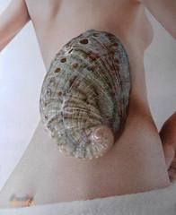 Peneira , Abalon (porteliña) Tags: abalon peneira orejademar