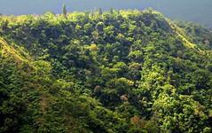 Blick vom Grat der ueren Caldera auf die Hnge der inneren Caldera; Batur, Bali (21) (Chironius) Tags: trees bali tree indonesia volcano rboles boom arbres rbol vulcan volcanoes grn gunung albero bume arbre rvore baum trd indonesien batur volcan vulkan volcn  aa