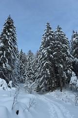 Mont Chemin (bulbocode909) Tags: nature suisse hiver bleu arbres neige paysages valais sentiers sapins forts montchemin