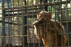 Prison Life - VI (Rafee Mizan Khan Chowdhury Niloy) Tags: people nature canon garden botanical zoo wildlife photowalk dhaka mirpur 70d