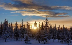 Good Morning from Alaska - (Explored) (JLS Photography - Alaska) Tags: trees winter sky sun snow nature alaska skyline clouds forest sunrise landscape landscapes woods skies outdoor north serene wilderness winterlandscape borealforest northof60 alaskalandscape jlsphotographyalaska