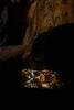 Cheddar Caves (Simon Clare Photography) Tags: cheddar caves cave pool water abstract cheddargorge dark brown reflection tones contrast colour digital d7200 landscape simonclare southwest simoncphotography explore england uk unitedkingdom underground nikon nature fotografi argazkilaritzac фотаздымак fotografija фотография fotografia fotografování fotografering fotografie fotograafia valokuvaus photographie fotografía φωτογραφία fényképezés ljósmyndun grianghrafadóireacht fotografēšana фотографија fotografovanie фотографія ffotograffiaeth פאָטאָגראַפיע تصوير צילום عکاسی fotoğrafçılık consequat foto pagkuha ng larawan sary whakaahua kujambula igbo ho ska li sawir picha fọtoyiya sclarephoto rural photographs for sale wwwsimonmaisiephotographycoukprints