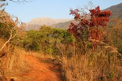 Mount Mulanje, Malawi ( Philipp Hamedl) Tags: africa sun landscape hiking hike malawi afrika landschaft wandern warmcolors mulanje nachmittag warmefarben mountmulanje