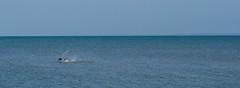 Pescar 2 (Races annimas) Tags: costa arbol atardecer mar colombia pescador caribe pescar pelcano islafuerte arbolquecamina