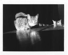 Lunchmate 4 with Gator-Cat (Oso Azul Design) Tags: shadow cats blackwhite refelection fpp fujifp3000b ellenbrooks gatorcat elbrooksphtography polaroid600seprofessional