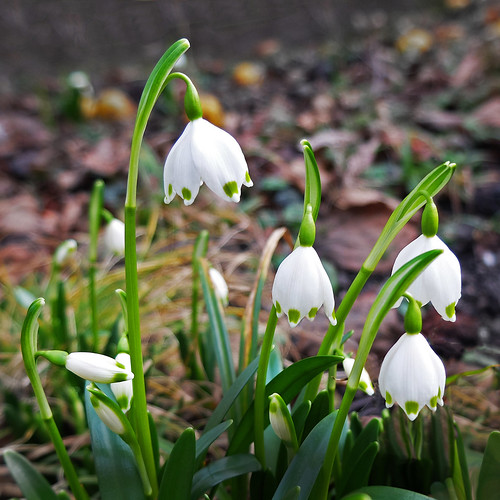 The first flowers - longing for spring