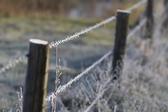 Prikkeldraad (NLHank) Tags: winter cold canon eos 7d 70200 prikkeldraad wanneperveen markii koud fris eos7d nlhank