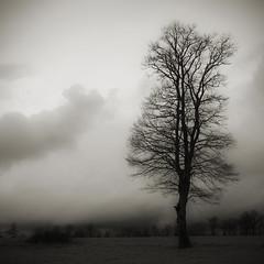 Lone soldier (Ben Bill) Tags: blackandwhite tree square solitude noiretblanc folk arbre carr innamoramento