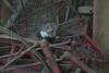 HJ_DSC_6079_061116 sm (hughjansman) Tags: steenmarter otterzentrumde