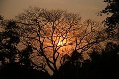 sunset (ainulislam) Tags: sunset sun black tree silhouette yellow amazing branch afternoon view dhaka bangladesh breathtaking