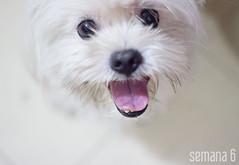Proyecto Semanal Marzo  Elsa Salinas (Elsa Salinas Gmez) Tags: dog pet blanco project photography march blog lima perro week marzo mascota proyecto surco doglover semanal elsasalinas