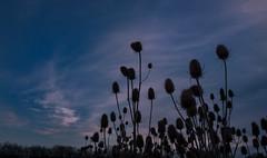Up towards the morning sky (Frank Busch) Tags: greatbritain sky plant countryside morninglight farm barnsdale frankbusch wwwfrankbuschname photobyfrankbusch frankbuschphotography imagebyfrankbusch wwwfrankbuschphoto
