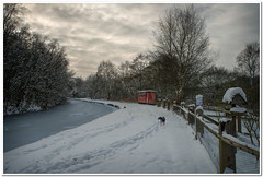 A winter day stroll (Hugh Stanton) Tags: dog snow tree fence canal frozen