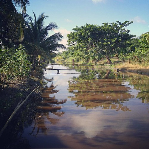 #Guyanese #backyard #fishinglife #countryside #mobilephotography #G4 #fishing #Guyana