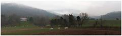 Between Elliston and Shawsville (daveelmore) Tags: panorama mist mountains fog farmhouse rural landscape virginia cattle farm hills va stitchedpanorama lumixleicadgsummilux25mm114