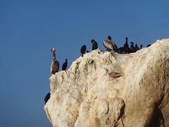 El Matador State Beach (ensign_beedrill) Tags: ocean birds pacificocean beaches elmatador elmatadorbeach elmatadorstatebeach malibutrip2016