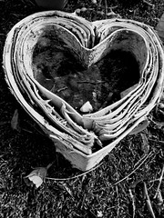 Birchbark Heart (Broot - Thanks for a half million views!!) Tags: blackandwhite bw plant paris flower monochrome cemetery grave spring memorial mourning tomb offering april tribute montparnasse grief